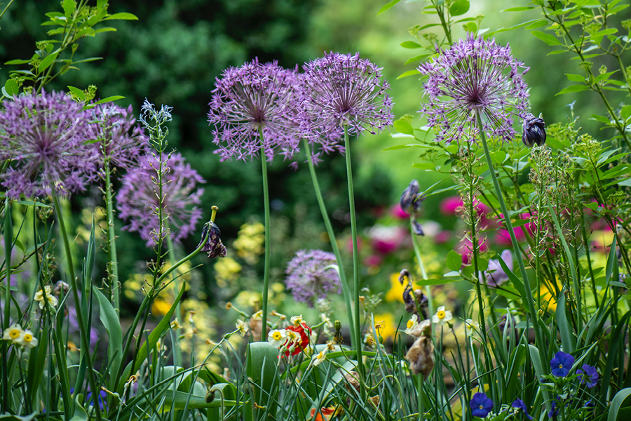 How to improve drainage in the garden