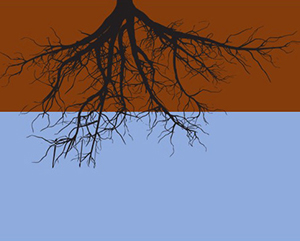 Land without drainage (roots are always wet)