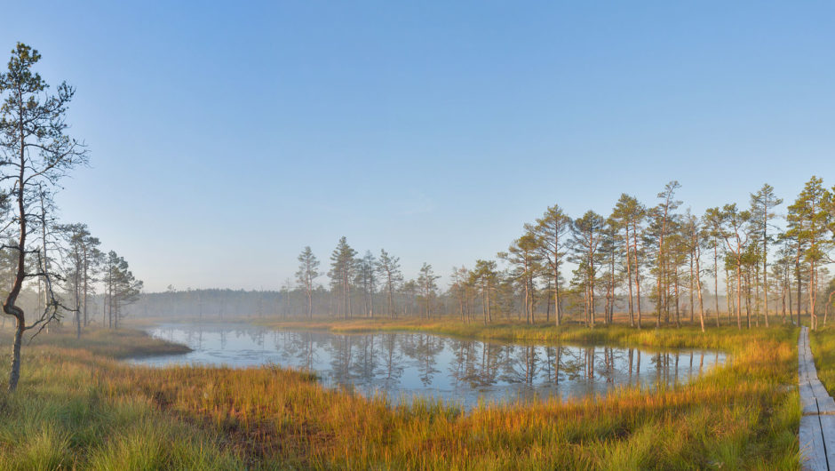 wetland that could be drained to produce profitable land